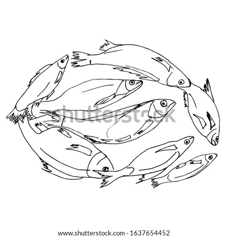 A quick sketch of a river fish lying in a circle. Fisherman's catch, drawn by hand, outline. The theme of sports fishing, sketching with a black line.