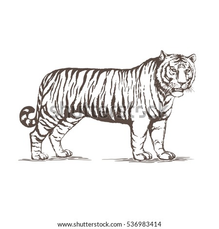 a realistic image of a tiger