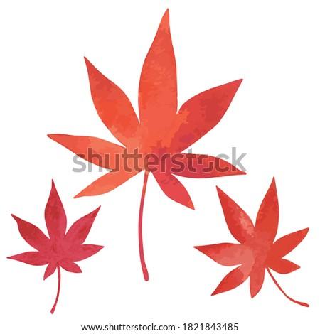 a reddish japanese maple leaf