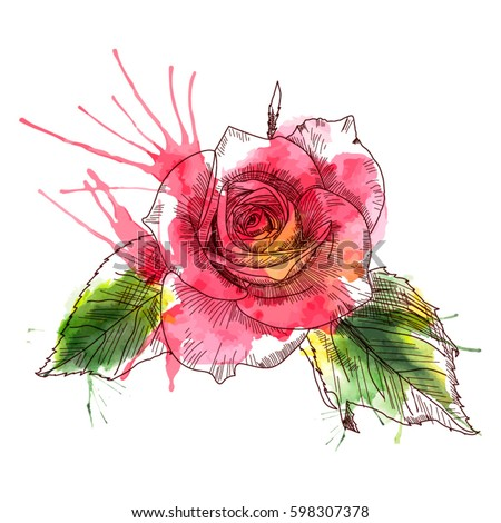 A Rose flowers. Texture background watercolor effect. Hand drawn sketch. Vector illustration isolated on white background. A template for the design.