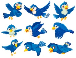 A set of blue bird illustration