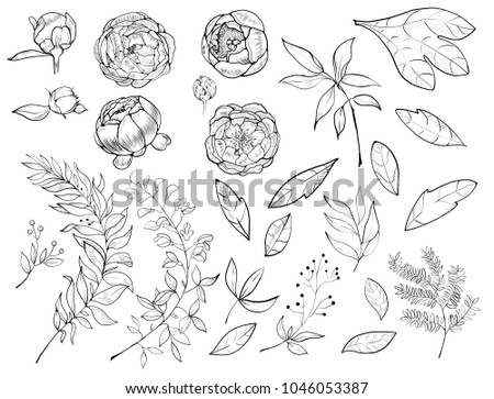 A set of botanical pions