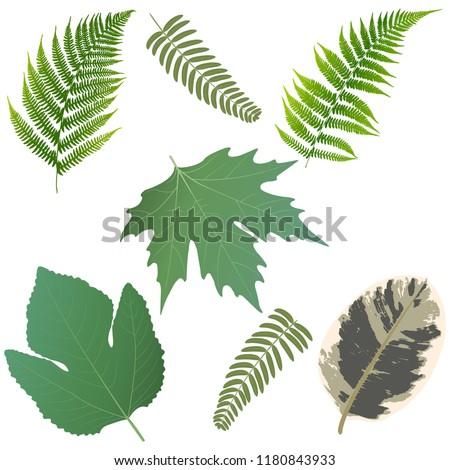 A set of colored leaves. Leaves of ferns,  sycamore leaf, figs leaf, ficus leaf. Vector illustration.