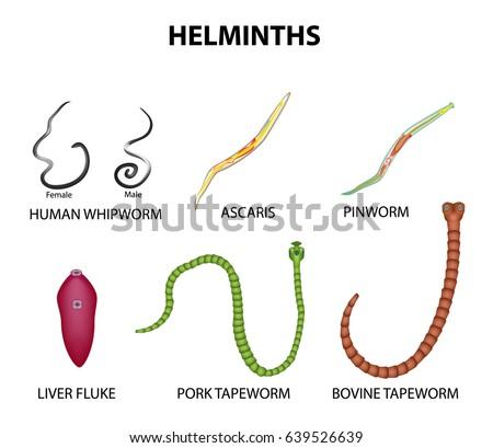 helminthiasis és enterobiasis
