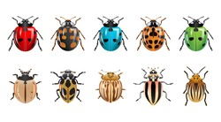 a set of ladybugs with different shapes and colors. modern design isolated white background.