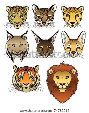 A set of 8 large predatory cat heads. Eps 8 Vector.