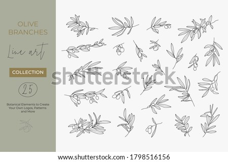 A set of Olive Branches in a Modern Linear Minimal Style. Vector Illustrations of Branches With fruits and Leaves for creating logos, patterns, greeting cards, wedding Invitations