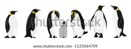 A set of realistic imperial penguins in different poses. Adult birds and chicks. Vector illustration, isolated on white background.