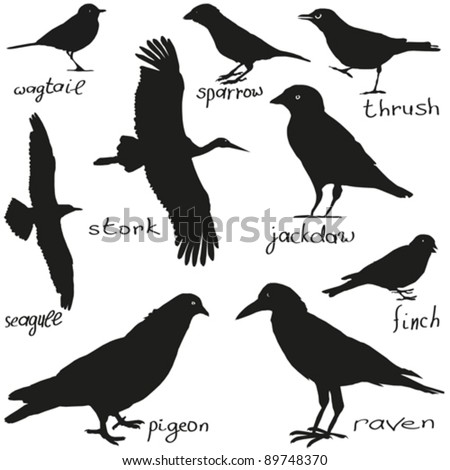 A set of silhouettes of different birds in black