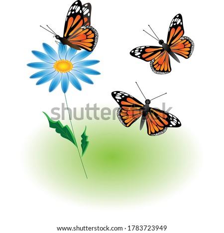 a set of three monarch