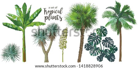 A set of Tropical bananas palm trees, monstera, yucca, leaf, fruits foliage collection. Vector watercolor realistic illustration. Vintage design