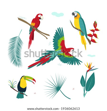 a set of tropical colorful