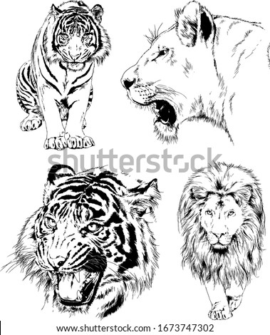 a set of vector drawings of