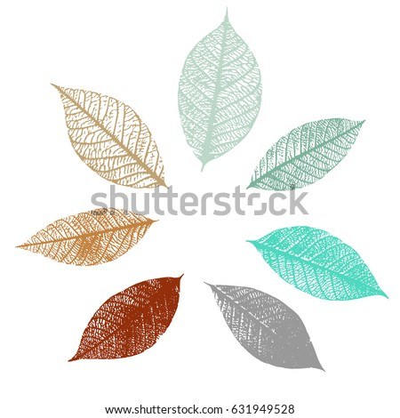 a set of vector skeleton leaves