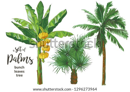 a set of vector tropical