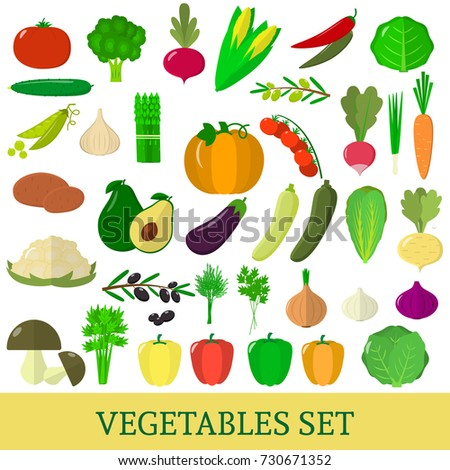 A set of vegetables. Organic vegetarian healthy food isolated on a white background. Vector. #730671352