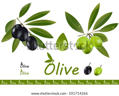 A set off green and black olive branch and an olive oil drop isolated on white a logo.