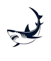 A shark on a white background. Vector illustration