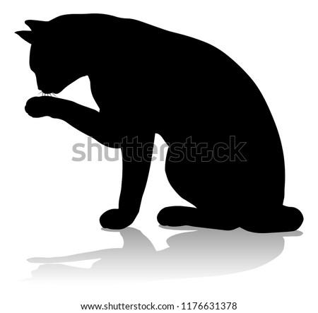 a silhouette cat pet animal