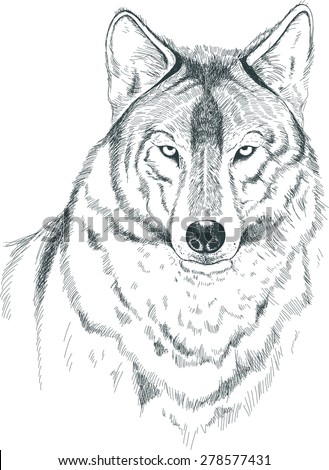 a sketch of a wolf handmade