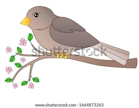 a small bird   a sparrow sits