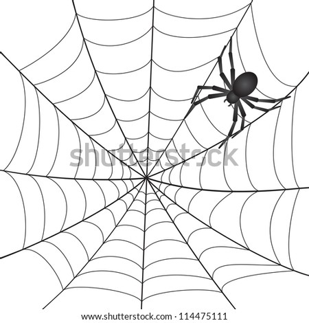 A Spiderweb with Spider on white background. Vector Illustration