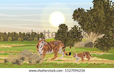 A tigress and her tiger cub walking along a plain with bushes, trees and dry grass. Animals of Asia. Panthera tigris. Big cats. Predatory mammals. Realistic vector landscape
