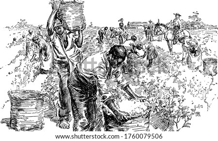 A typical representation of slaves on a cotton plantation, showing how they work in the field, vintage line drawing or engraving illustration. Foto stock ©