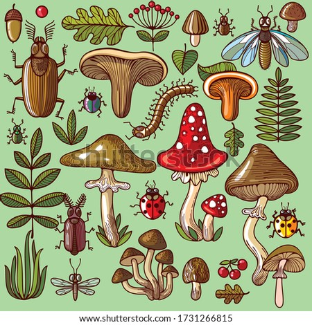a variety of fungi  edible and