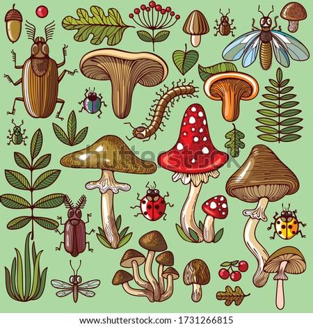 a variety of fungi  edible and