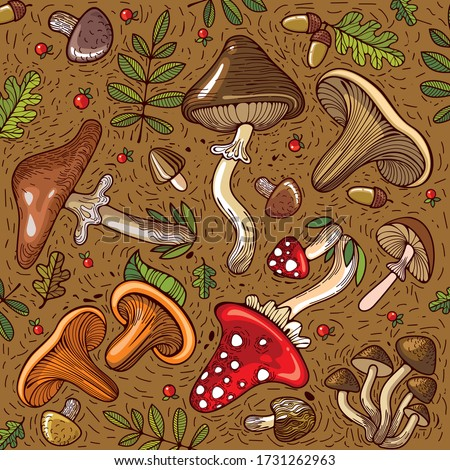 a variety of mushrooms  edible