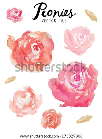 a vector floral collection of