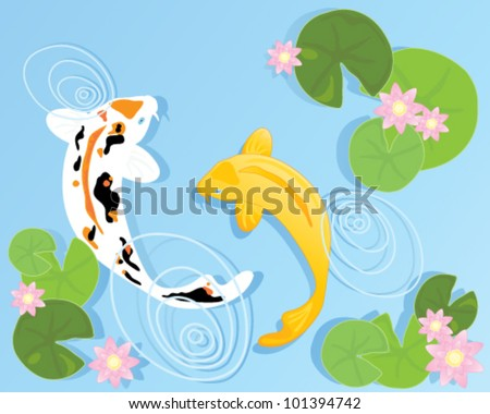 a vector illustration in eps 10 format of two beautiful koi carp swimming in a clear pool with rippled water lilly leaves and pink flowers