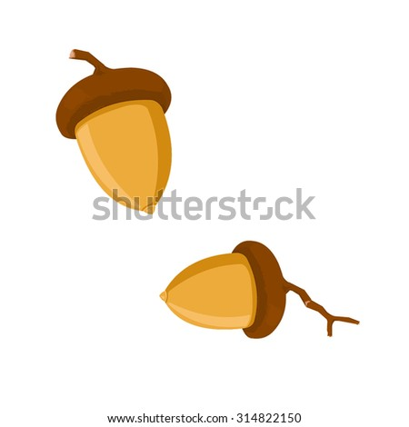 A vector illustration of an acorn. Acorn icon illustration. the fruit of the oak tree, smooth oval nut in a rough cap base.