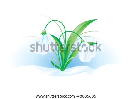 A vector illustration of snowdrops