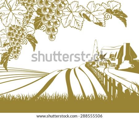 a vineyard rolling hills scene