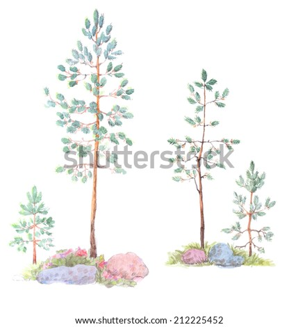 A watercolor hand-painted illustration of four small pines isolated on white background. Vector illustration.
