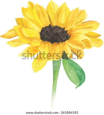 a watercolour sunflower