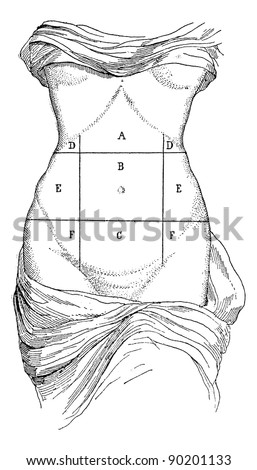 Abdomen and its subdivisions, vintage engraved illustration.  Usual Medicine Dictionary by Dr Labarthe - 1885