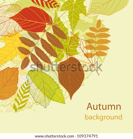 Abstract autumn beauty background with your text for wallpaper, texture, poster, pattern, label, emblem, sign, sybol, frame, decoration, grungy ornament, illustration, border, brochure vector eps 8