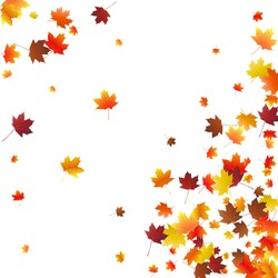 Abstract autumnal background with flying maple leaves. Fall season greeting card, poster, flyer. Vector illustration isolated on a white background.