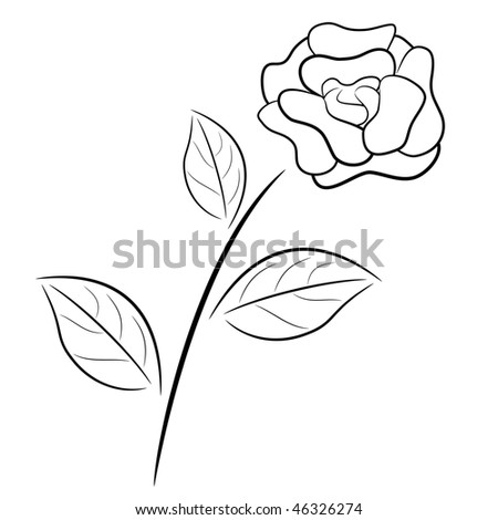 black and white rose in