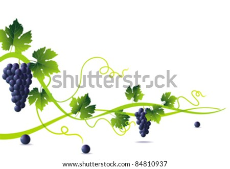 abstract green liana and bunch of blue grapes with green leaves