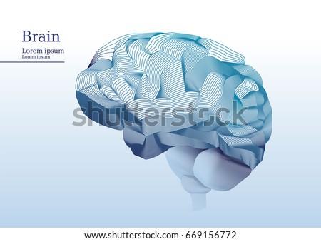 Abstract illustration of anatomical human brain