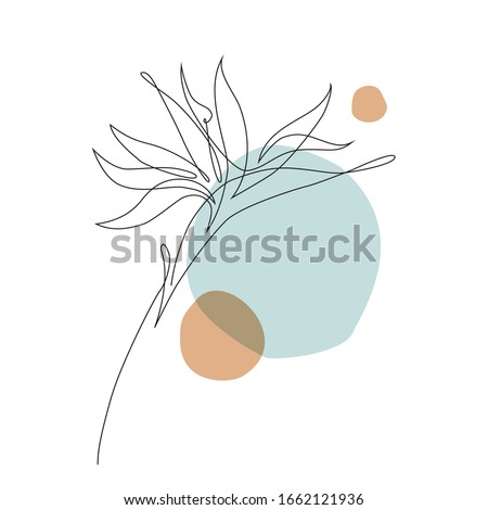 Abstract one line art tropical flower. Strelitzia contour drawing. Minimal art flower on geometric shapes backgroud. Modern black and white illustration. Elegant continuous line drawing