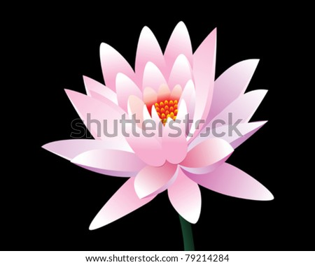 abstract pink lotus flower vector illustration