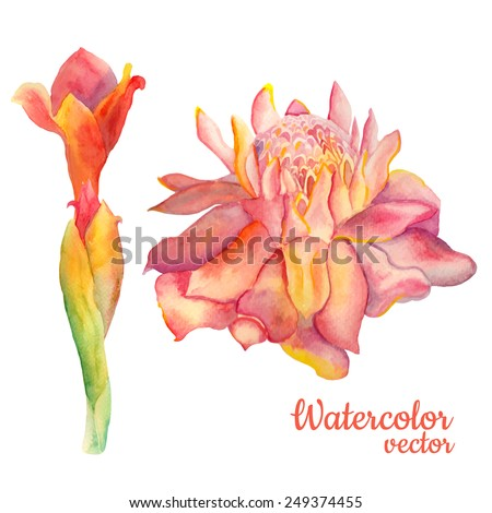 abstract vector floral