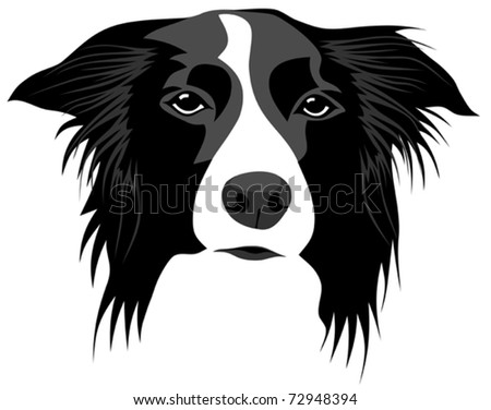 Abstract vector illustration of border collie head
