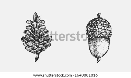 Acorn and pinecone hand drawn isolated illustration set. Tree seeds, foliage and forest plant elements for graphic design projects. Clip art for postcards, posters, invitations, floral compositions. Stock photo ©