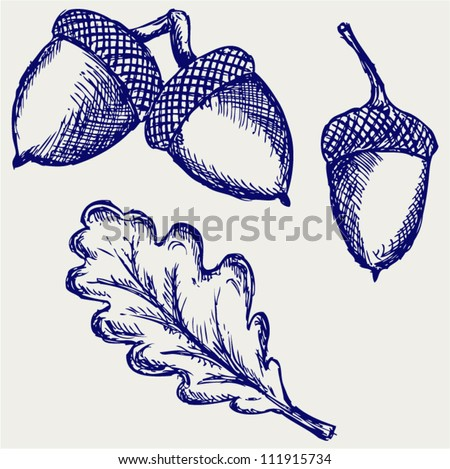 Acorn. Doodle style - stock vector